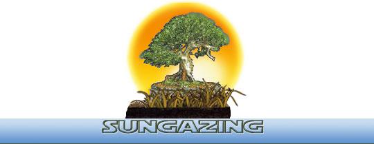 solar healing book